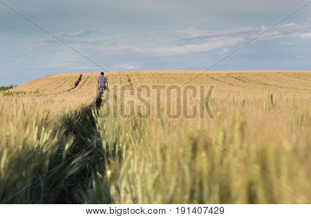 Farmer Walking In Wheat Field