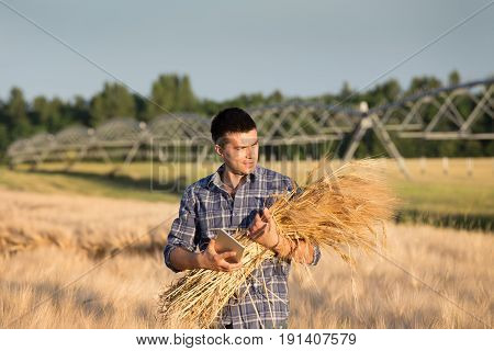 Farmer With Barley Stems And Tablet In Field