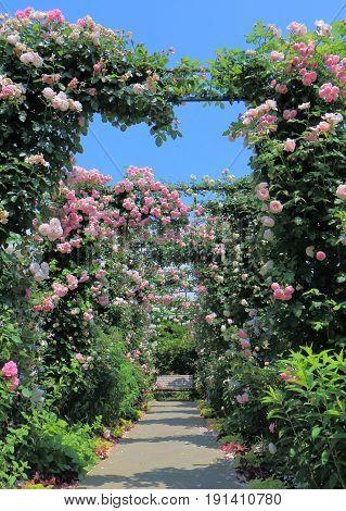 Beautiful rose garden flower arcade and bench