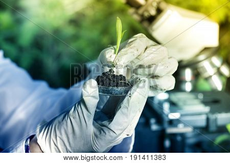 Scientist Holding Sprout Above Petri Dish