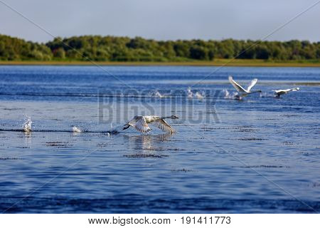 Landscape With Different Birds In The Danube Delta
