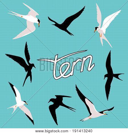 tern  bird vector illustration style Flat  set silhouette black