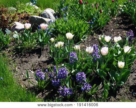 Many different flowers on the flower bed
