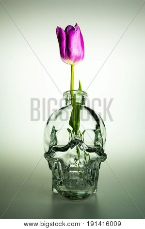 Empty glass head with violet flower vase and purple tulip flower