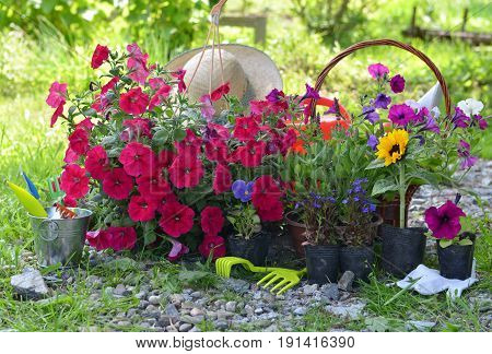 Summer still life with flowers in planting pots and garden working tools in sunny garden. Vintage planting flowers concept