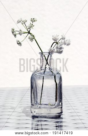 Wild Flowers in a small glass jar against a high key background. Retro country style still life.