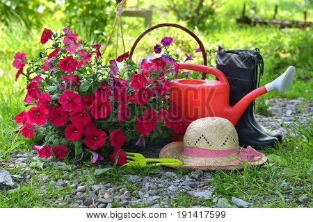 Garden still life with petunia flowers, straw hat, watering can and boots against sunny grass background. Vintage planting flowers concept
