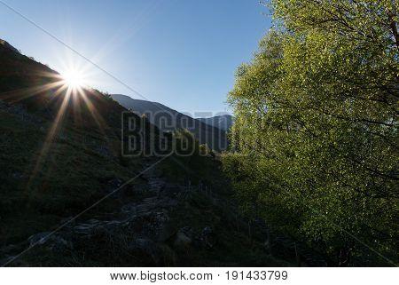 Sun lit tree on climb to Ben Nevis