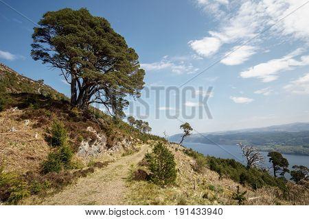 Single tree in front of Loch Ness on Great Glen Way