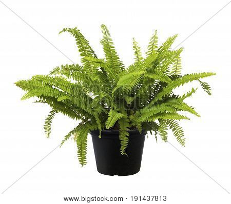 Fern, Green Leaf Tree Plant Fresh Nature