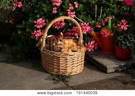 Mushrooms / Basket with edible mushrooms .