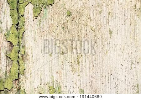Texture of remains of green cracked dye on weathered wooden surface