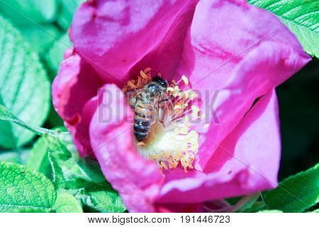 The Bee Collects The Nectar