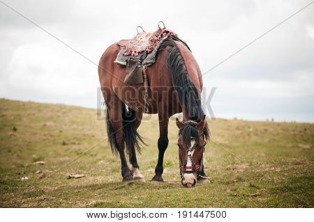 Horse eating in the field in summer