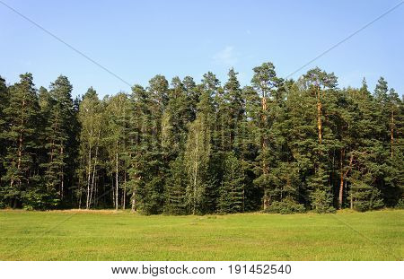 Country landscape with meadow and forest summer sunny day