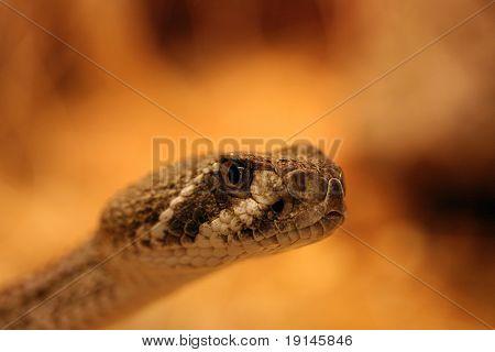 A dangerous snake poster