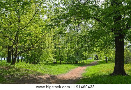 Pedestrian path in the spring deciduous forest.