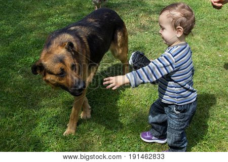 On the grass the boy is a small hand to catch a big dog