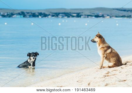 Two dogs on the beach one at sea the other on land is very fun