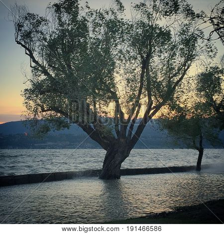 Trees on lake shore submerged in water. Flooded lake with waves splashing over barricades. Sunset sky over mountains in background.