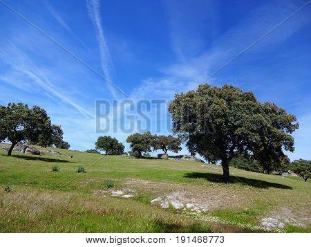 Cielo azul en la dehesa extremeña( España).