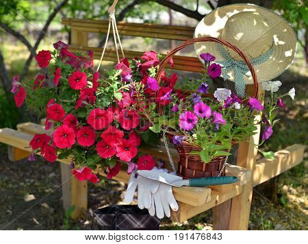 Still life with purple petunia flowers, protective gloves, spade and straw hat on the bench in the sunny garden. Vintage planting flowers concept