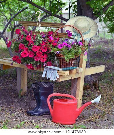 Beautiful background with petunia flowers, working tools and watering can by the bench in the garden. Vintage planting flowers concept