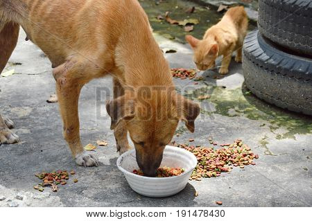 street dog and ginger kitten feeding instant dried food in car junkyard