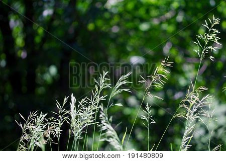 Wild grass brightly lit against a dull green background
