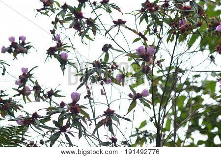A tall, high-purple flower tree seemed to pierce the sky