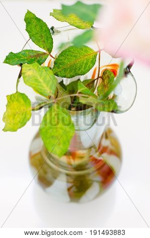 a flower in vase with leaves closeup