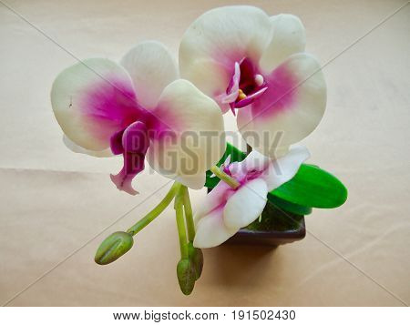 White orchid, plastic artificial flower decorated flawer