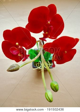 Red orchid, plastic artificial flower decorated flower