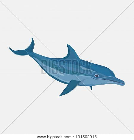 icon realistic dolphin water park entertainment flat design vector image