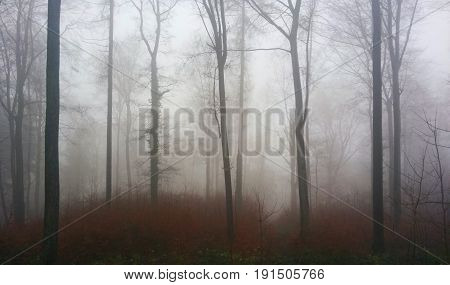 Mist morning in the fall forest. Germany