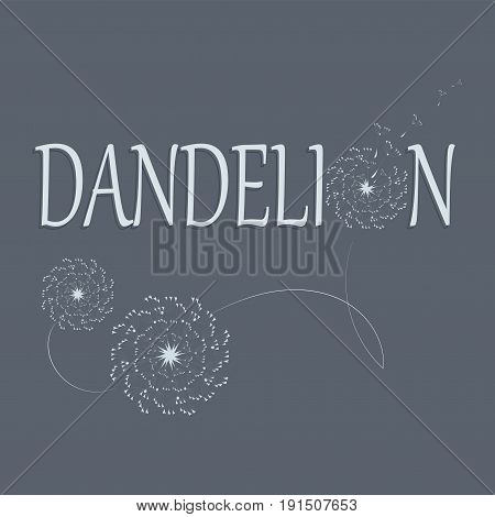 Dandelions. Flower and its name. Logo, emblem, icon. The word and the silhouette of a dandelion on gray background. Flying parachutes of a dandelion Dark border words and white flowers.