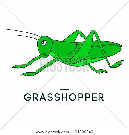 Green grasshopper. Vector isolated image of a locust. Handwritten image. For prints, posters, videos, mobile apps, web sites and print projects.