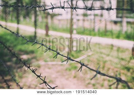Barbed wire on the background of greenery. Restricted boundary