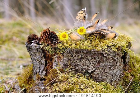 Partridge feathers lay on moss in a shape of a bird, Puumala region, Finland