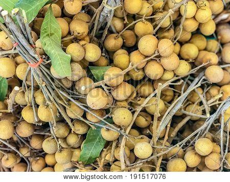 longan fresh longan fruit Dimocarpus longan fruit from Asia the same family of lychee.
