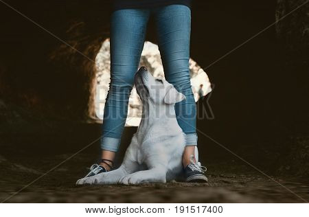 young labrador retriever dog puppy sits between the legs of a young girl - dog school in cave