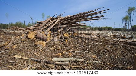 Logs stacked up in a big logging operation in Saskatchewan Canada