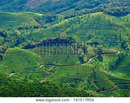 Panoramic views of the tea gardens of Munnar