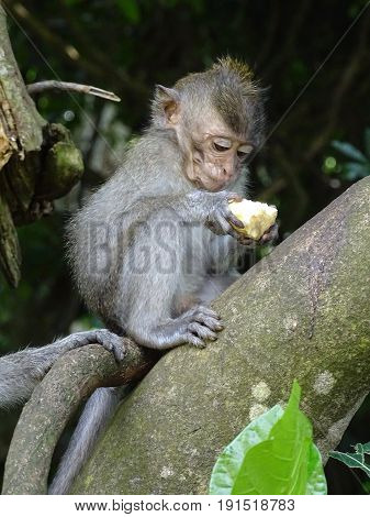 monkeys in a forest, playful and mischievous