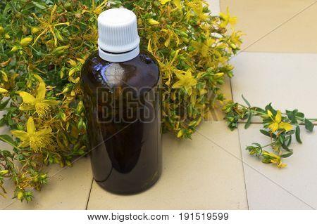 St. John's oil bottle and fresh flower St. John's wort
