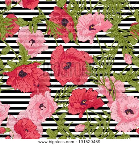 Seamless pattern with pink and red poppy flowers in botanical style on white and black stripes background. Stock line vector illustration.