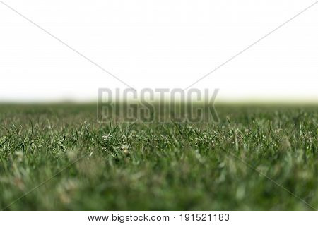Grass Background with White Space of Text Shallow Depth of Field