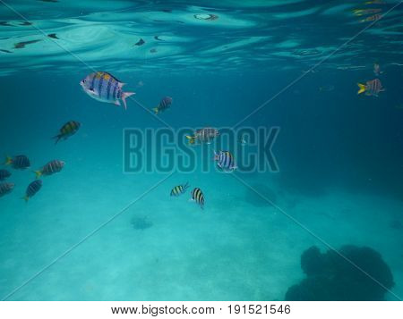 Under Sea. A Lot Of Little Fish Diving Under Water. Have Coral Putting On Seafloor. This Image For M