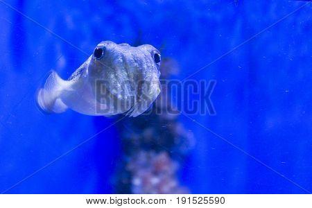 Squid Portrait Close Up