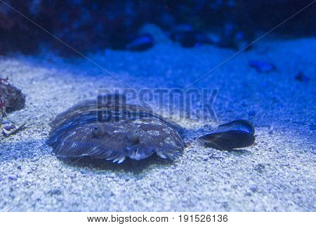 Close Up Of Marine Fish